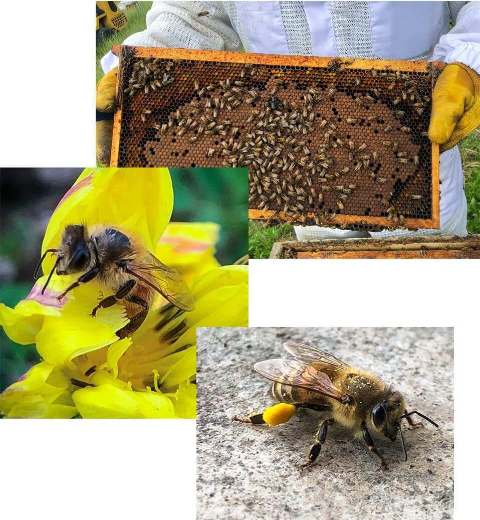 Happy Honey Bees Images