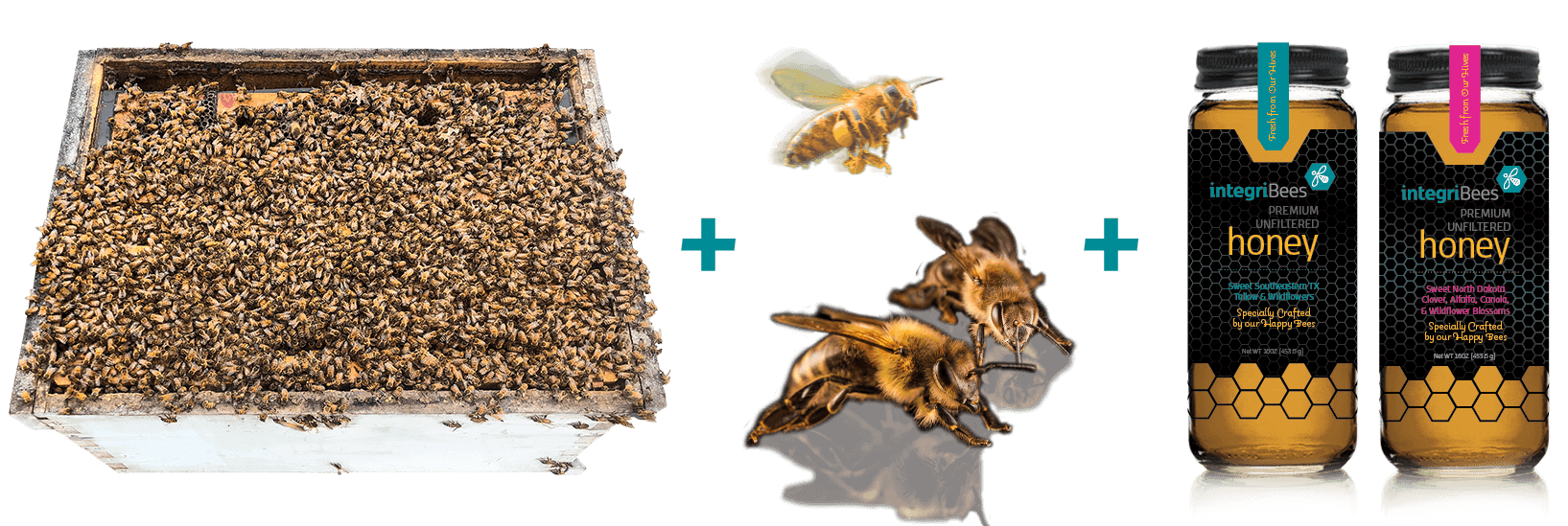 Bee Hive & Jars of Honey
