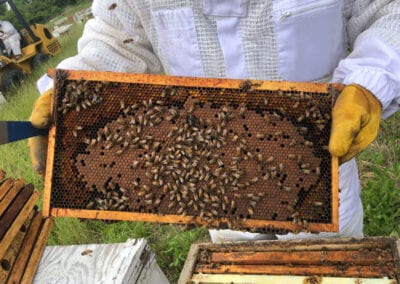 Holding Frame from Hive