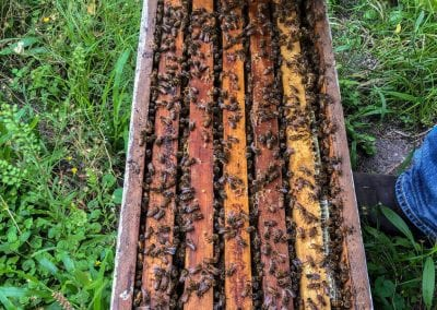 Spring Nuc Starter Hive image